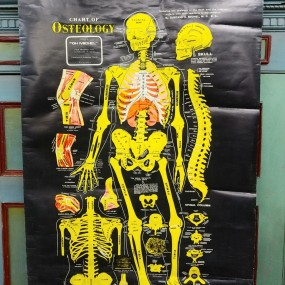 Anatomical map
