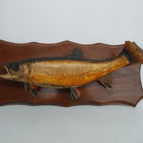 Stuffed fish trout